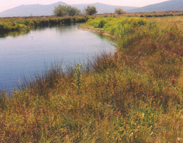 Hawkins Ranch Streambank Restoration